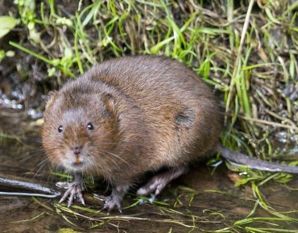 Животные озера Байкал Описания названия виды и