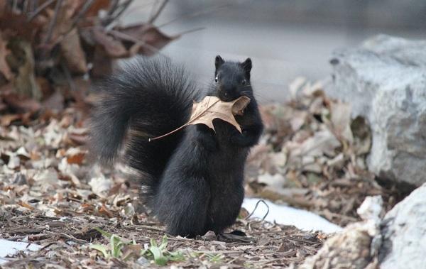 Equirrel-djur-beskrivning-Egenskaper-View-Life-Life-and-onsdag-Breath-22