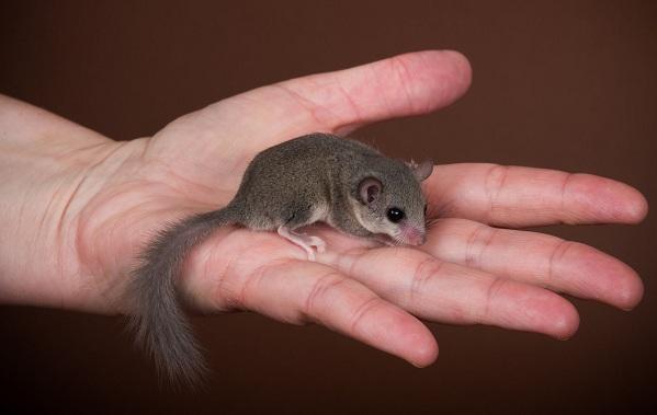Equirrel-Djur-Beskrivning-Egenskaper-View-Life-Life-and-onsdag-Breath-6