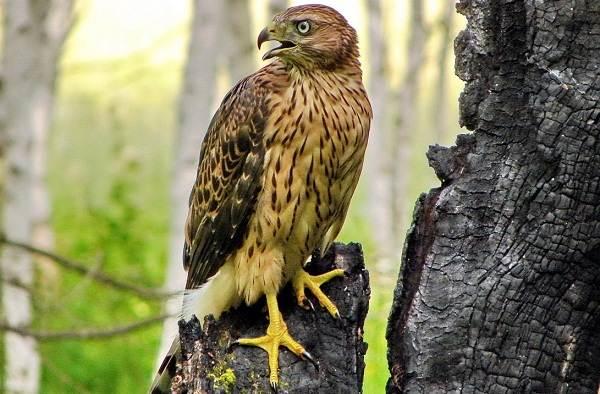 Оседлые птицы. Описание, названия, виды и фото оседлых ...