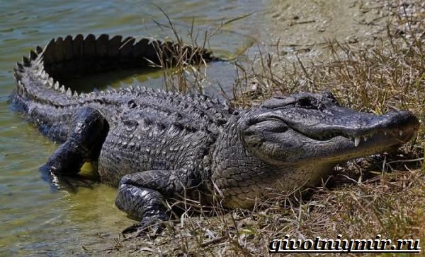 تمساح الحيوانات النمط الحيوي - والبيئة - الموئل التمساح - 1