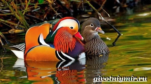 Птицы Из Красной Книги России Фото И Описание