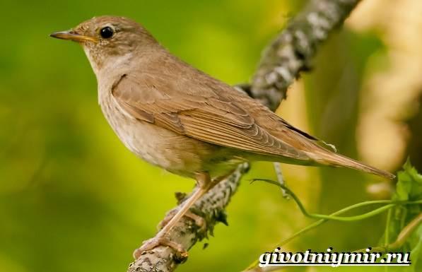 Птицы средней полосы России | Животный мир