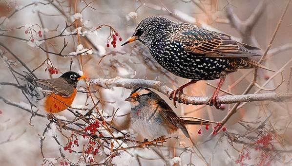 Птицы Рязанской Области Фото С Названиями