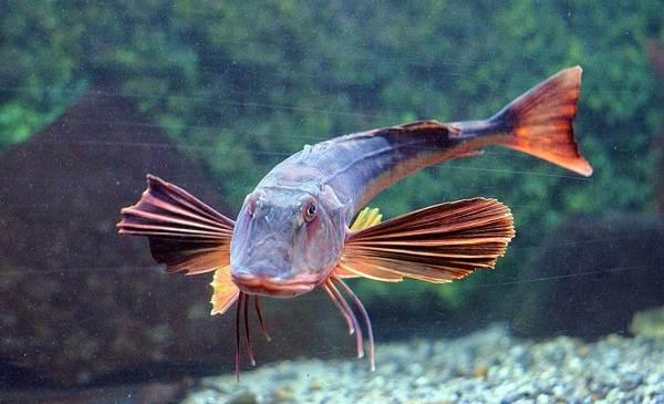 Фото Рыб Черного Моря С Названиями