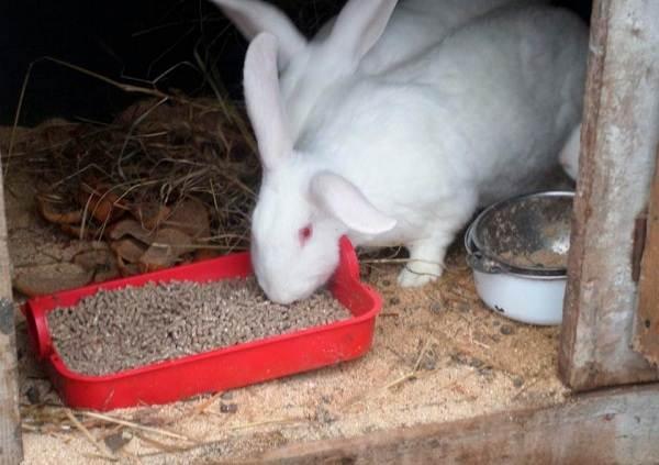 Кролики-породы-великан-Описание-особенности-виды-уход-и-содержание-10