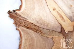 Продольный срез древесины. Развитие гнили по суку