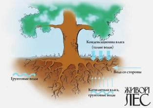 Водоснабжение корня