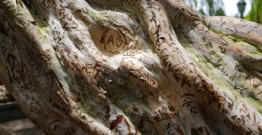 названия деревьев