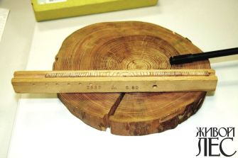 Годичные кольца расскажут все о жизни дерева