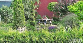 формирование и посадка живых изгородей