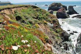 Береговые дюны и скалы осваивают светолюбивые, засухо-и солеустойчиые виды