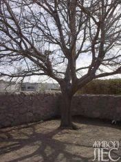 tree-000-1254131