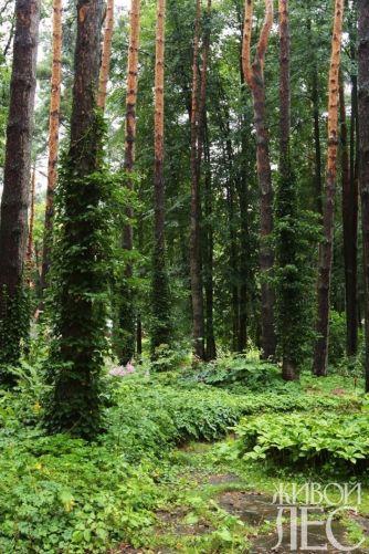 дача в лесу