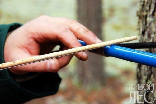 Исследуя керн, дендохронолог расскажет все о состоянии дерева
