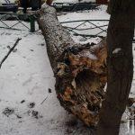 падение дерева