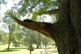 раны на дереве