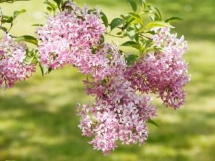 flowers-2252116_1280