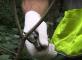 видео обрезки молодых деревьев