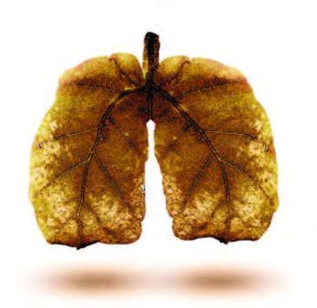 болезни деревьев и кустарников