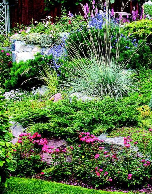 Для небольших горок хороши стелющиеся формы хвойных и почвопокровные розы
