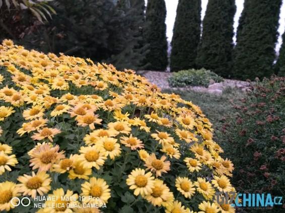 Ostřeno na květy v pozadí