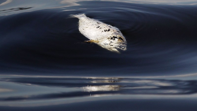 Heavily Polluted Guanabara Bay To Be Site For Water Sports At Rio Summer Olympics