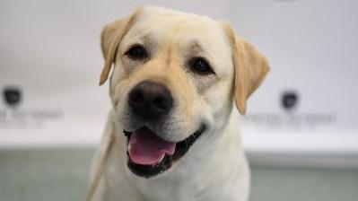 Um cachorro feliz