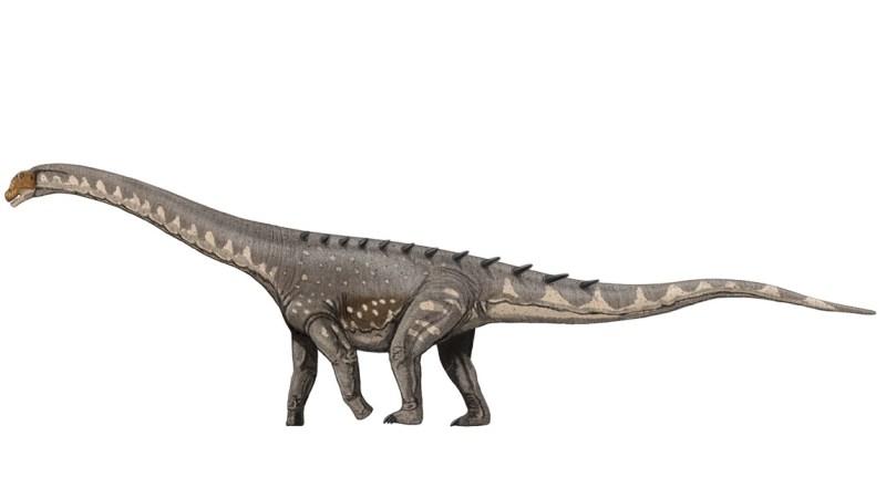 Saurópode Ampelosaurus atacis. Crédito: Wikimedia