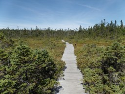 View across the peat bog
