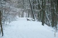 schnee (5 von 26)
