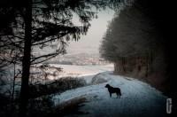 schnee (6 von 26)