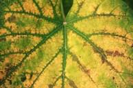 Herbst fetzt - Weinblatt