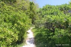 Track through Pistonia Forest