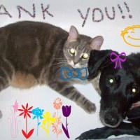 So.....Many.....Thank Yous.....