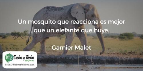 Elefante - Garnier Malet