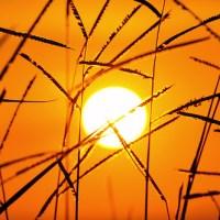 El sol como alimento