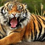 Psychological facts of animals - gkaim