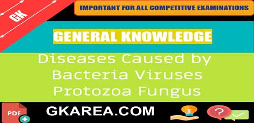 Human Diseases Caused by Bacteria viruses Protozoa and Fungi