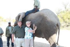 lee-me-elephant