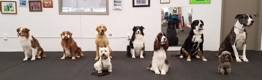 Open Utility Group Greater Kansas City Dog Training Club