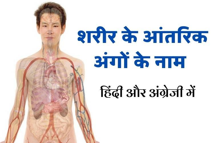 मानव शरीर के आंतरिक अंग - Internal Body Parts in Hindi