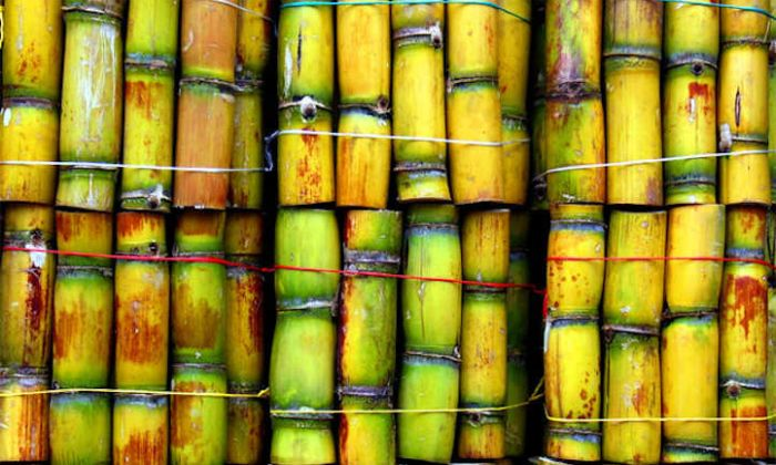 "GUYS!! What Is ""Sugarcane"" Called In Your Native Language? (Be Proud To Share) 1"