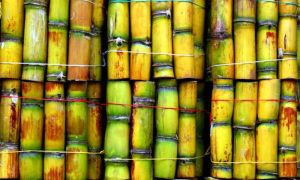 "GUYS!! What Is ""Sugarcane"" Called In Your Native Language? (Be Proud To Share) 2"