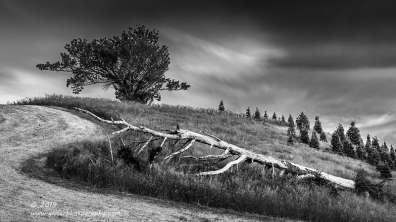 """""""Stricken"""", Canon 5D Mk3, 24-70mm f/2.8L Mk2, 120 seconds, Singh-Ray, Mor Slo 10-Stop ND Grad, Converted to black and white in Lightroom"""