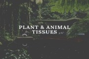 Tissues [Plant and Animal Tissues]
