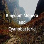 kingdom Monera and Cyanobacteria