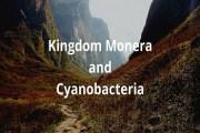 Characteristics of Kingdom Monera