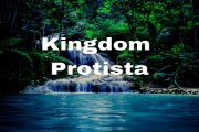 What kinds of organisms are grouped under Kingdom Protista? Would you consider this kingdom a natural one?