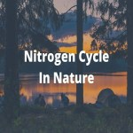 nitrogen cycle in environment